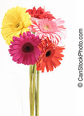 Gerberas in Vase - Bright bunch of Gerberas in vase