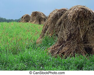 Haystacks 5 - Haystacks in field in Ohio