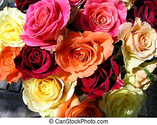 Roses - A bunch of coloured roses