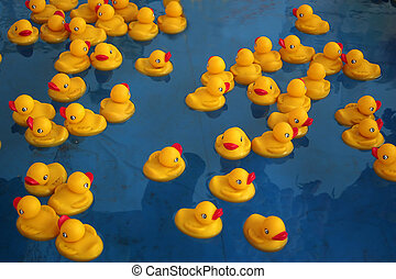 Rubber Ducky's - Rubber Duckys swimmin in a blue pool