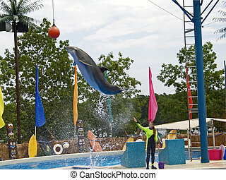 Dolphin Jump - This is a shot of a dolphin jumping way up...