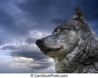 FREEDOM - Canadian Wolf