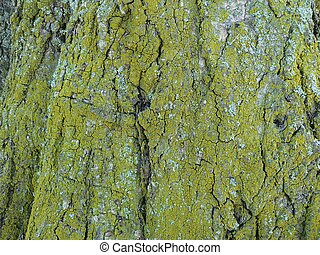 Lichen tree - Lichen on tree