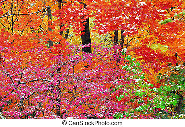 Red forest in Jiuzhaigou Valley Scenic and Historic Interest...