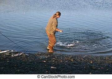 Pulling In Salmon - A fisherman pulling in a large silver...