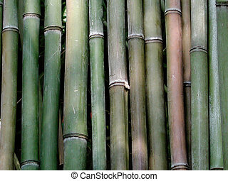 Bamboo Rods - A group of cut bamboo rods in dappled...