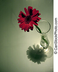 In The Spotlight - Single flower in a vase with a beautiful...