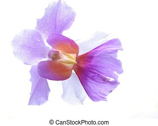 Orchid Closeup - Wild orchid flower, slightly overexposed on...