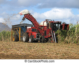 Harvester - Sugar cane harvester