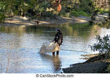 Moving the net - Whitebaitting on the Waikanae river New...