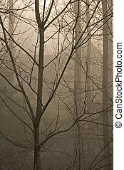 JWC_006_054_05 - Bare Trees in Fog