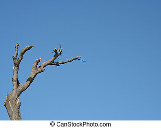Gnarly Tree - a gnarly old dead tree