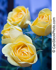 Rose 3 - yellow roses on blue