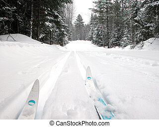 cross country skiing - Cross country skiing in forest
