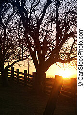 Sunlit Silhouette - Sunlight Silhouette of trees and fence...