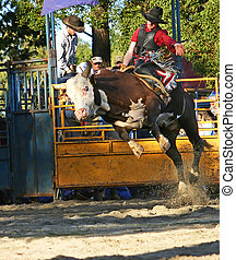 Bull Rider 2 - Man riding a bull at a rodeo