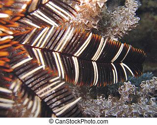 Detail - Crinoid - Featherstar or crinoid detail