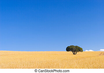 Cape Trees #2 - Single green tree in dry yellow grass with...