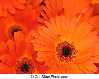 Orange flowers - Close up of orange flowers