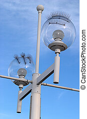 Seagull-proof Street Lamp - A streetlight in Florida with...