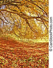 Autumns - beautiful autumn mood