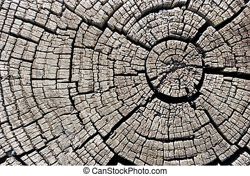 Tree Stump - Cross section of old tree stump
