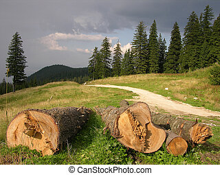 SAVE THE FOREST ! - Stop The Land Clearing !
