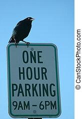 One Hour Parking W/Bird