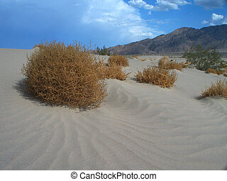 tumbleweed - deserts tumbleweeds set against a blue sky and...