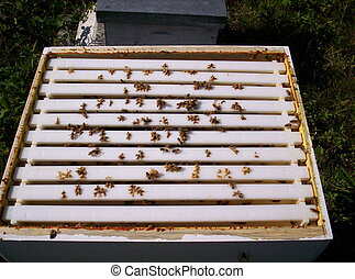 honey bee hive with top off Indian garden farm Bridgewater...