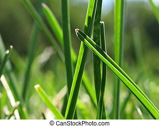 In The Grass - This is a super close up of some blades of...