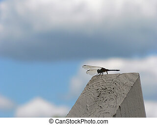 Dragonfly 2 - Dragon Fly on Wood Post