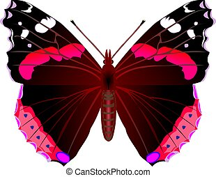 Butterfly - Red admiral butterfly
