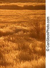 Golden Morning - Winter grasses shimmer in the golden light...