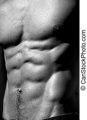 rippling male torso #5 - well defined naked male torso