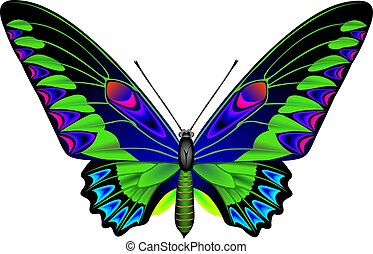 Tropical butterfly artistic image
