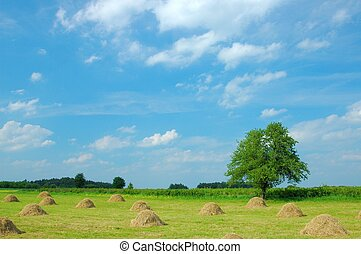 Summer Landscape - Meadow with hay stacks
