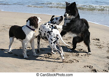 3 dogs playing