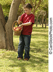 Child holding a basket of apples