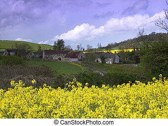 Rape seed village - A view of Priston village over a crop of...
