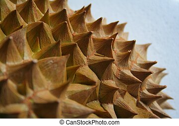 Durian Thorns - Shell husk of the prized durian fruit