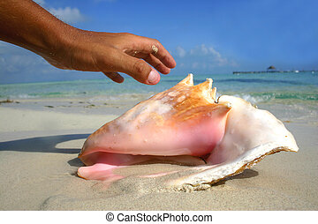Hand and Conch - Hand reaching for seashell on perfect beach
