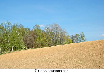Spring Landscape - Field and trees