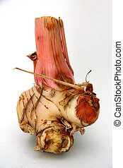 Galangal - Plant root in the ginger family