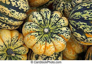 Winter Squash - Winter squash in market