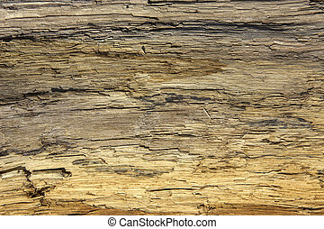 Driftwood detail sand point beach England uk