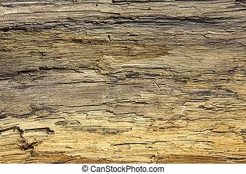 Driftwood detail sand point beach England uk