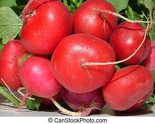 radishes - red radishes
