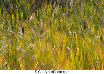 Reed Abstract - Photograph of reeds blowing in the wind at...