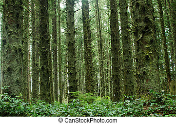 Green Forest - A beautiful mossy forest in Oregon